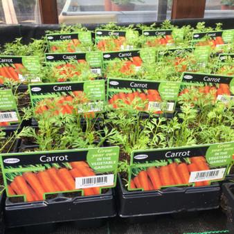 Carrot Cellpack