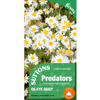 Suttons Attract Predators - Ox-Eye Daisy