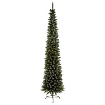 2M PENCIL PINE SNOW TIPPED- Tree 32