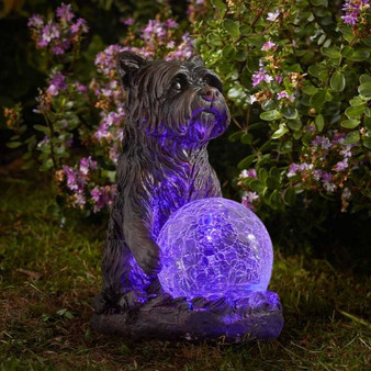 Mystic Dog