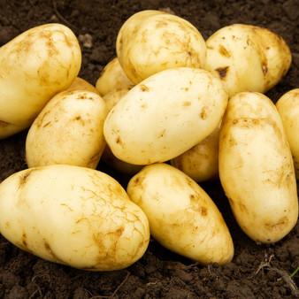 Arran Pilot Seed Potatoes 2KG