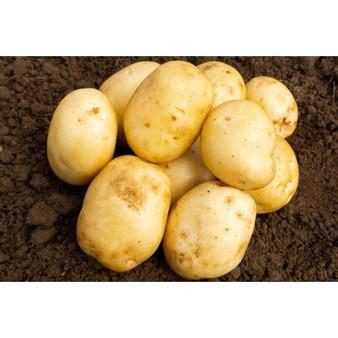 Home Guard Seed Potatoes 2KG