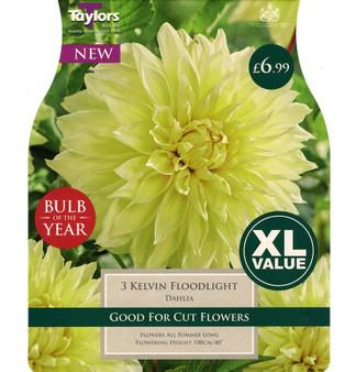 Dahlia Kelvin Floodlight - 'Summer Flowering Bulb Of The Year'