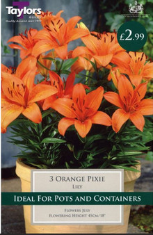 Lily Orange Pixie