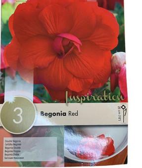 Begonia Double Red (Kapiteyn)