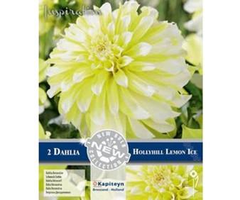 Dahlia Decorative Hollyhill Lemon Ice (Kapiteyn)