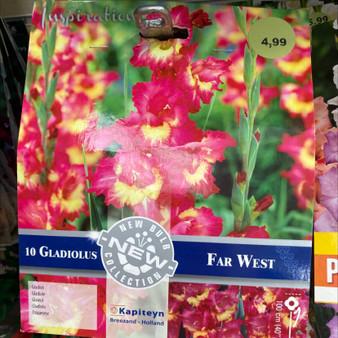 Gladiolus Far West (Kapiteyn)
