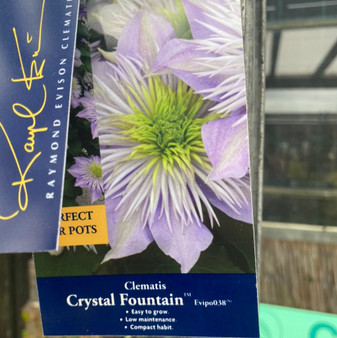 Clematis Crystal Fountain 3L