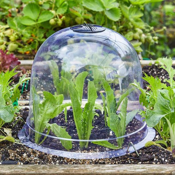 Bell Cloche - Large (6513005)