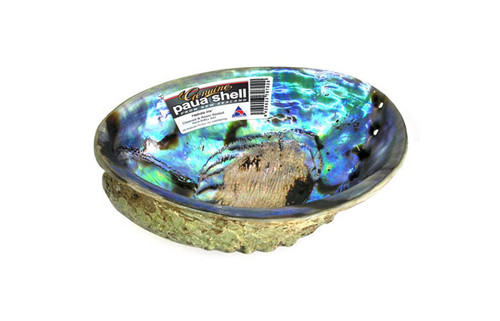 Paua Shell Cleaned and Sealed