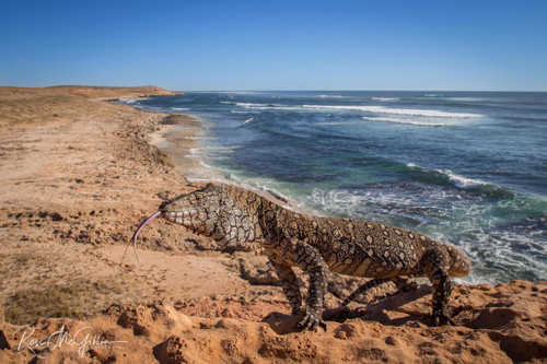 Perentie Coast - Digital Download