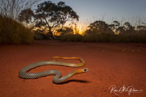 Serpent Sundown Digital Download