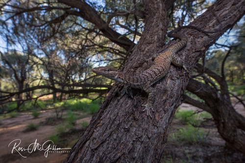 Fetching Freckled Monitor Digital Download