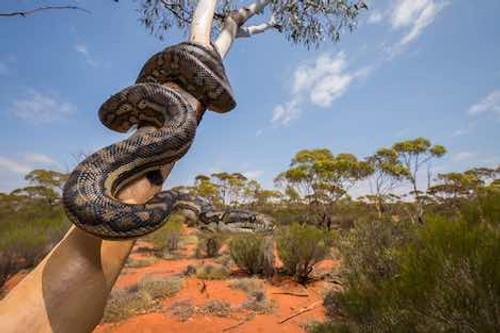 Peaceful Python - Digital Download