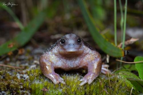 Weird & Wonderful Turtle Frog - Digital Download