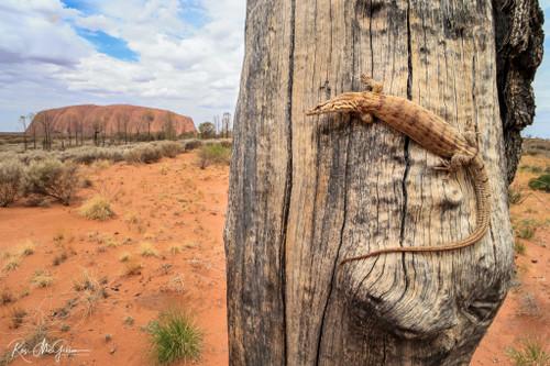 Uluru Pygmy Mulga Monitor - Digital Download