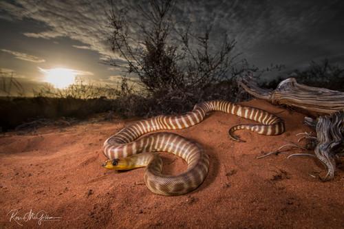 Woma Python Sunset - Digital Download