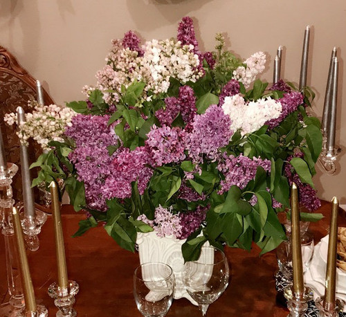 Lilac is a seasonal flower.  Based on availability.  25 lusciously scented mixed color Lilac stems.