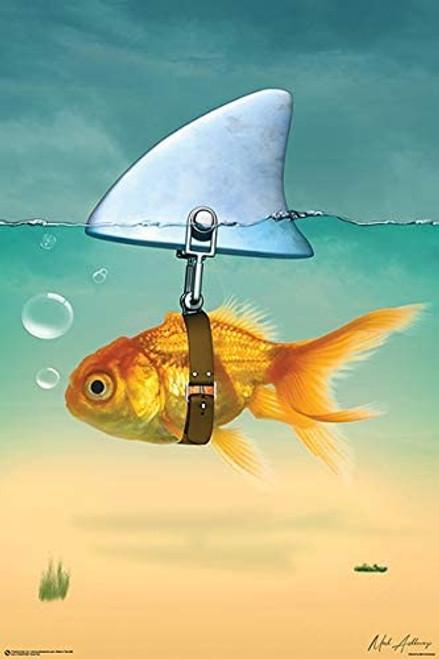 Gold Fish Shark Poster 24x36