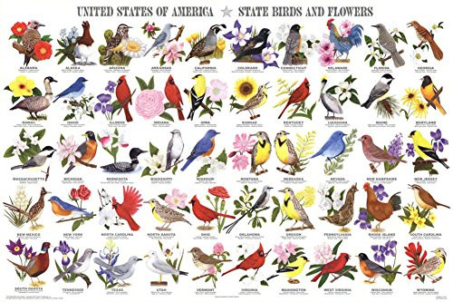 State Birds and Flowers Educational Chart Poster 36 x 24in