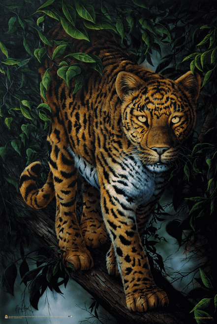 """Watchful Eyes by Jenny Newland Poster - 11"""" x 17"""""""
