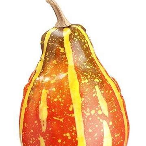 "5"" Acorn Gourd"