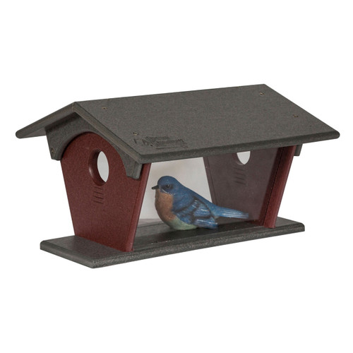 Bluebird Feeder | Bird Feeders Best