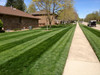 Customer photo showing the results with this lawn striper