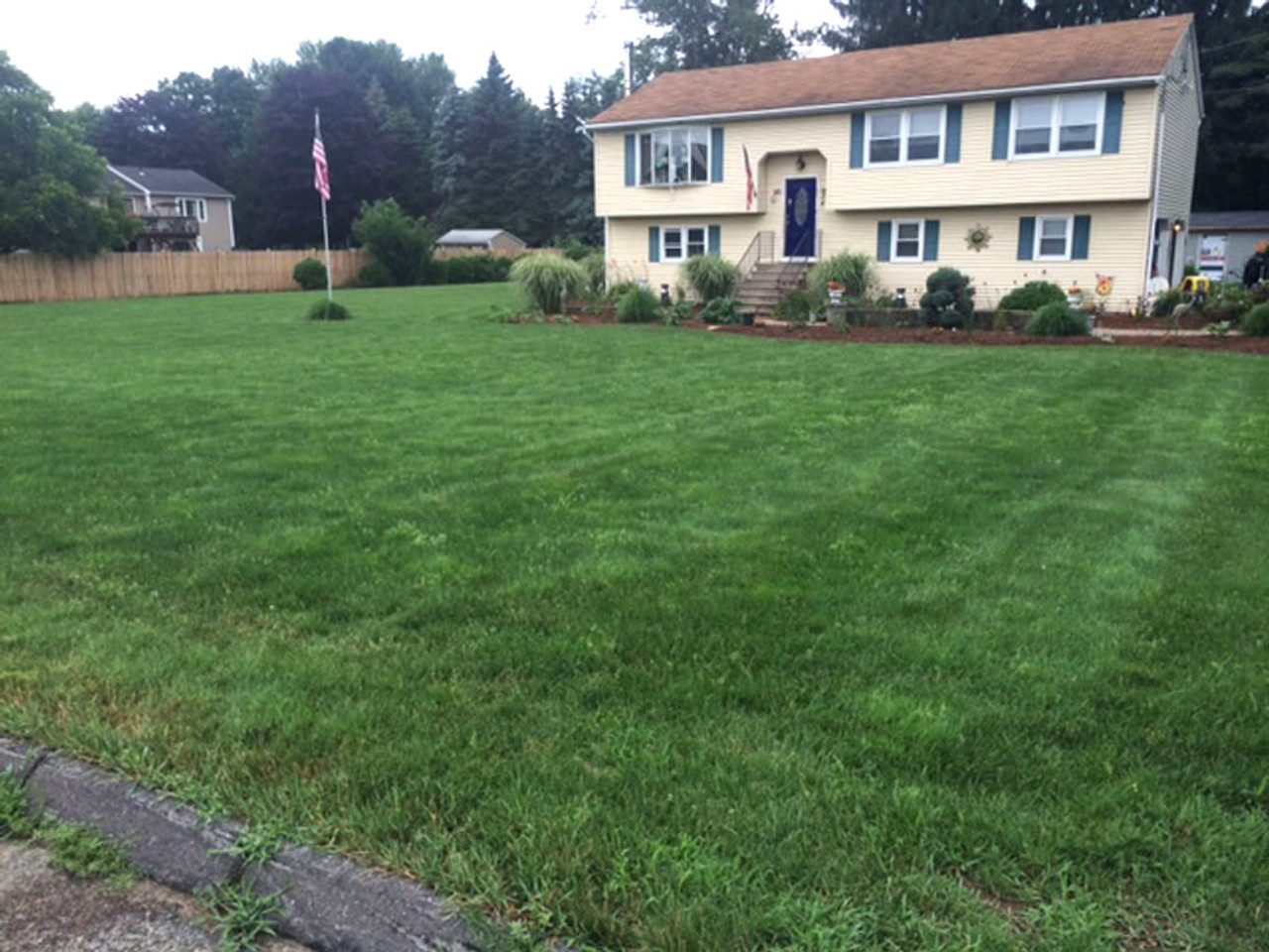 Before mowing  (Customer supplied photo)