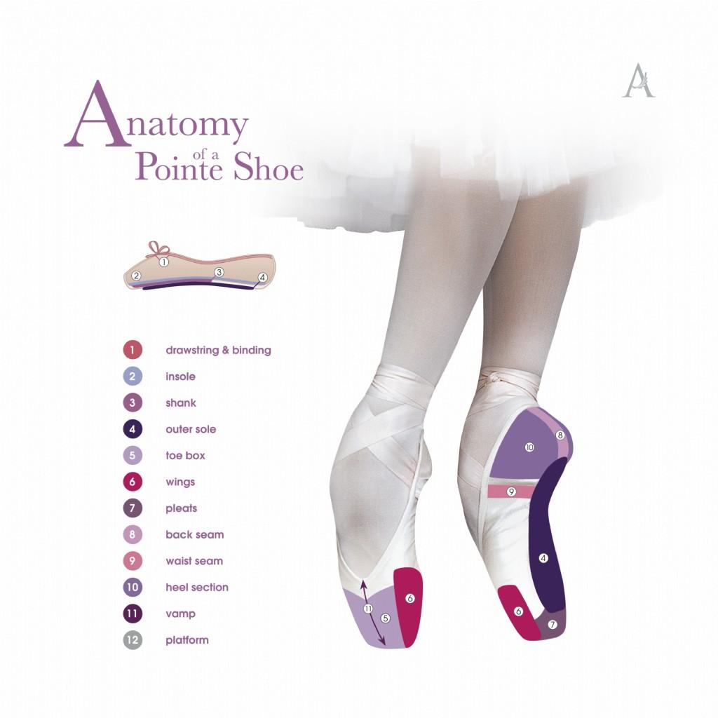 anatomy-diagram-1024x1024.jpg