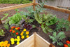 Cedar Complete Raised Garden Bed Kit - 8' x 16'