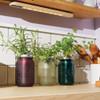 Oregano Garden Jar