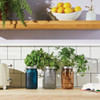 Garden Jar Collection