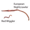 Composting Worms - European Nightcrawlers