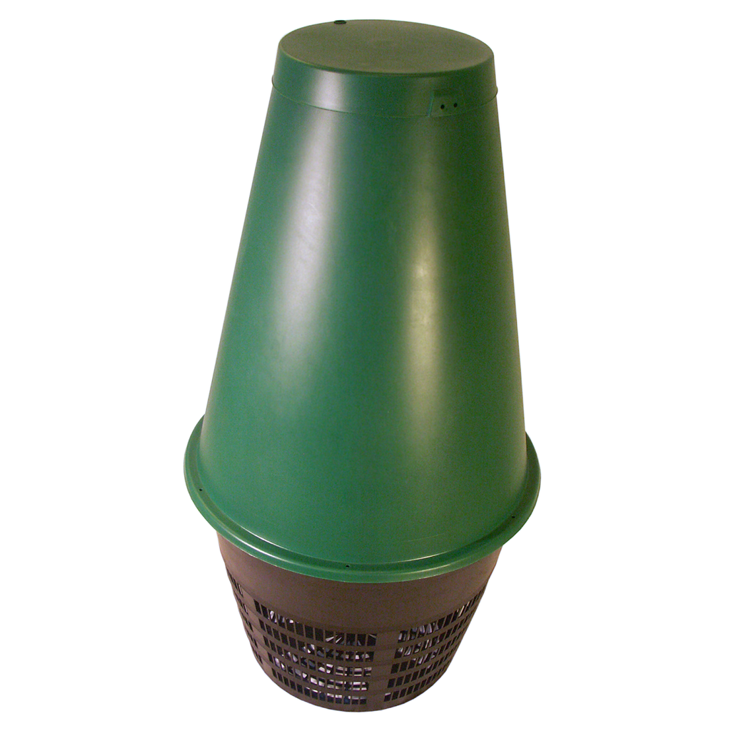 Outer Cone