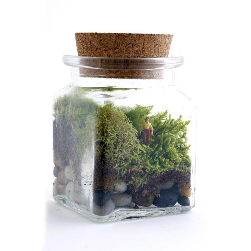 Le Petit Singularite Diy Terrarium Eartheasy Com