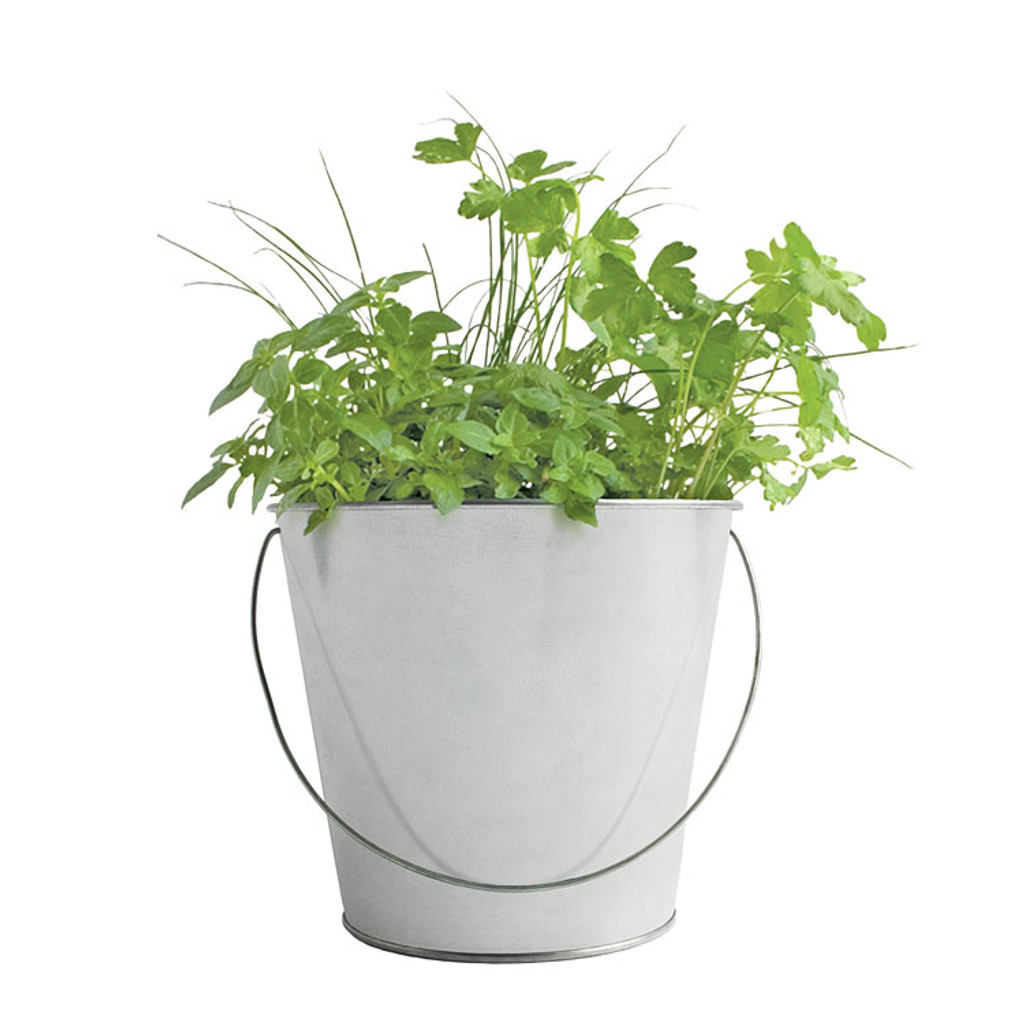 Herb Mini-Garden-in-a-Pail