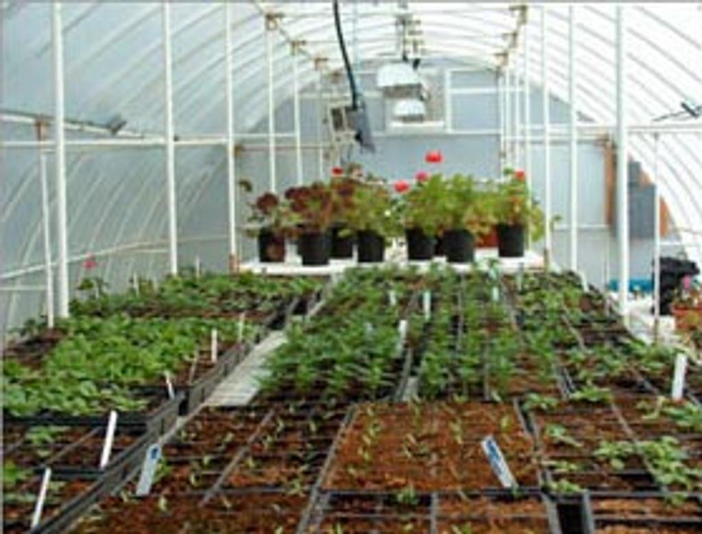 "Solexx Conservatory Greenhouse Kit - 16' x 16' x 9'6"""
