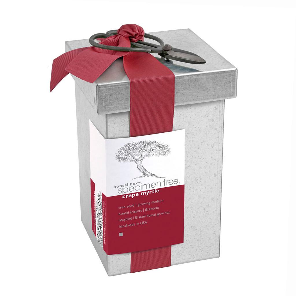 Crepe Myrtle Bonsai Box