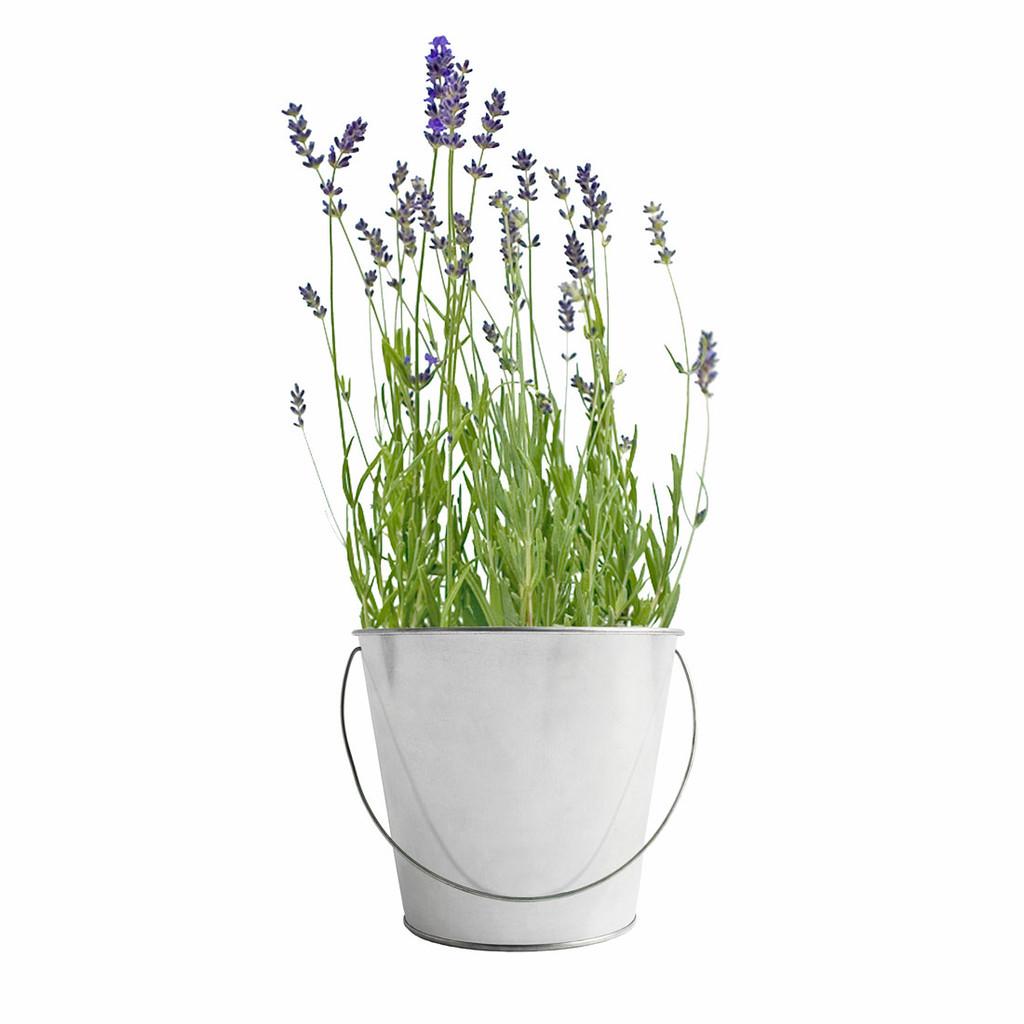 Lavender Garden-in-a-Pail