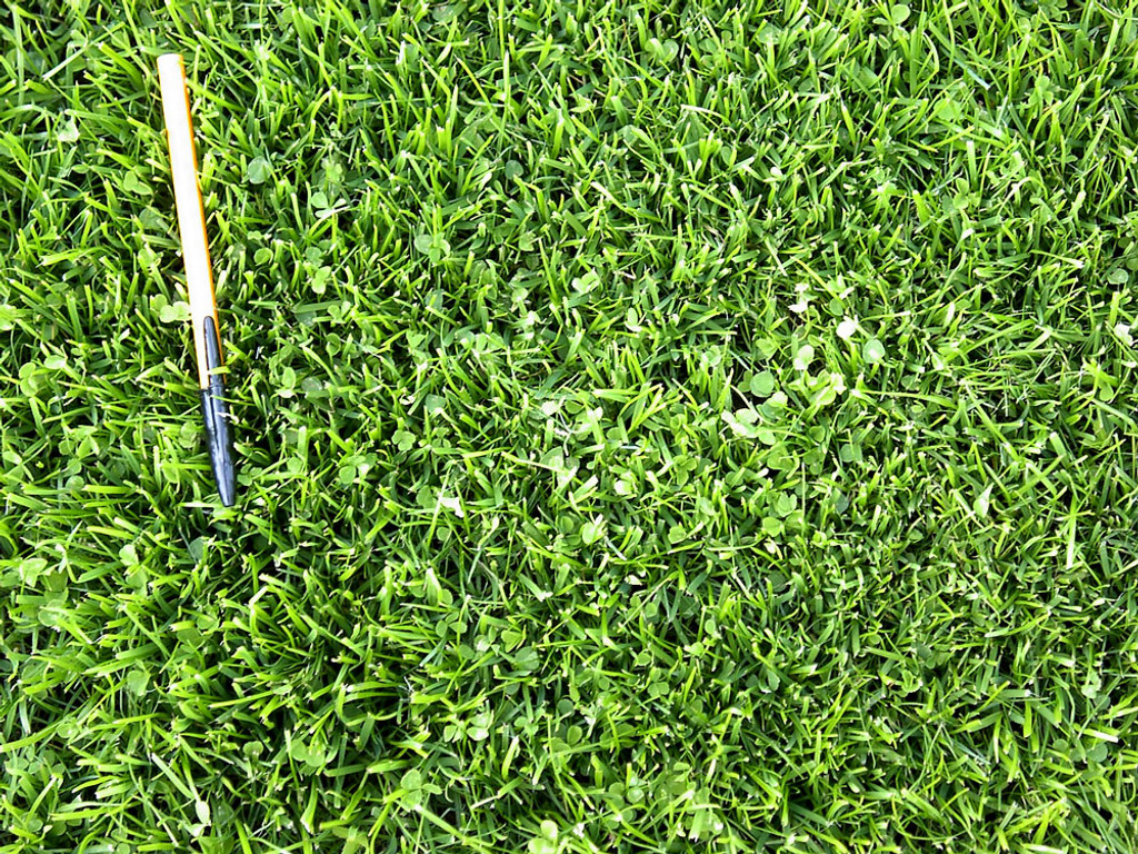 MicroLawn Grass Seed & Microclover Blend - 5 lbs