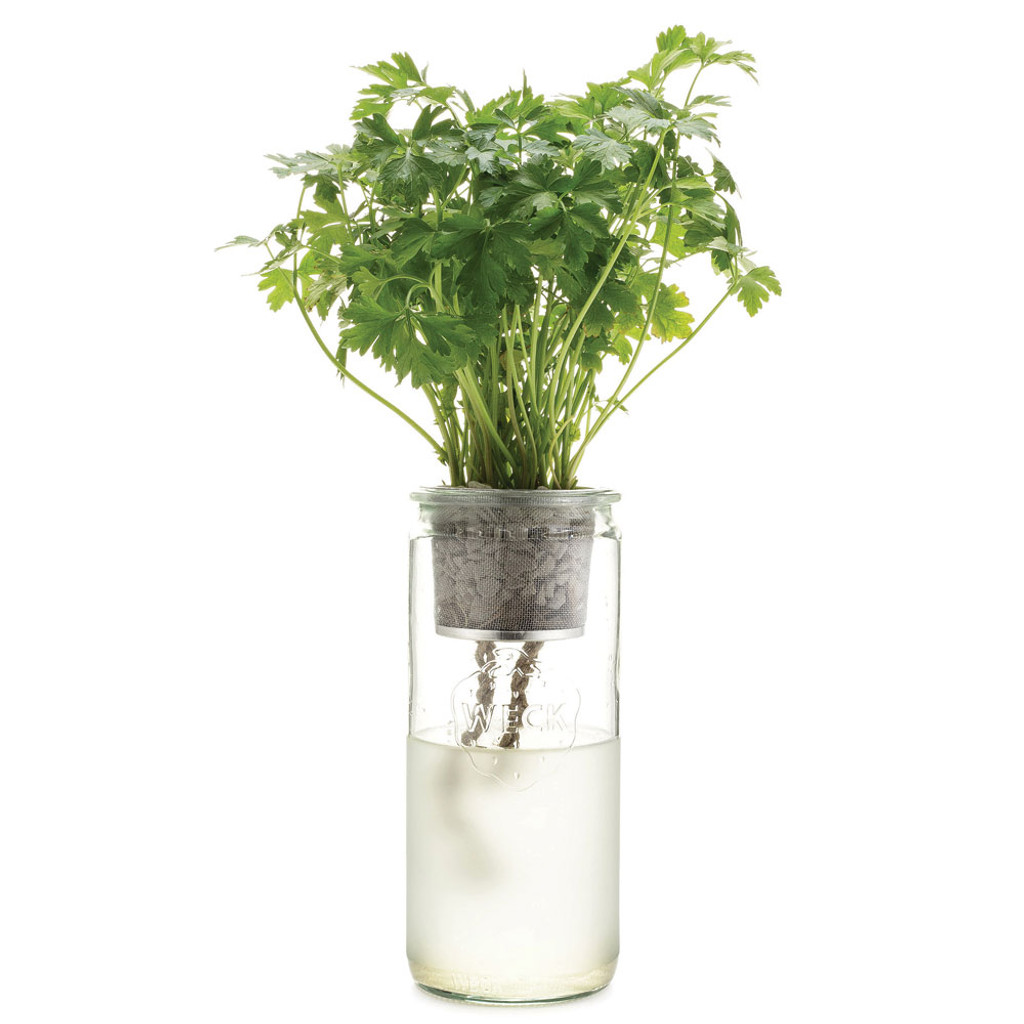 Parsley Eco Planter