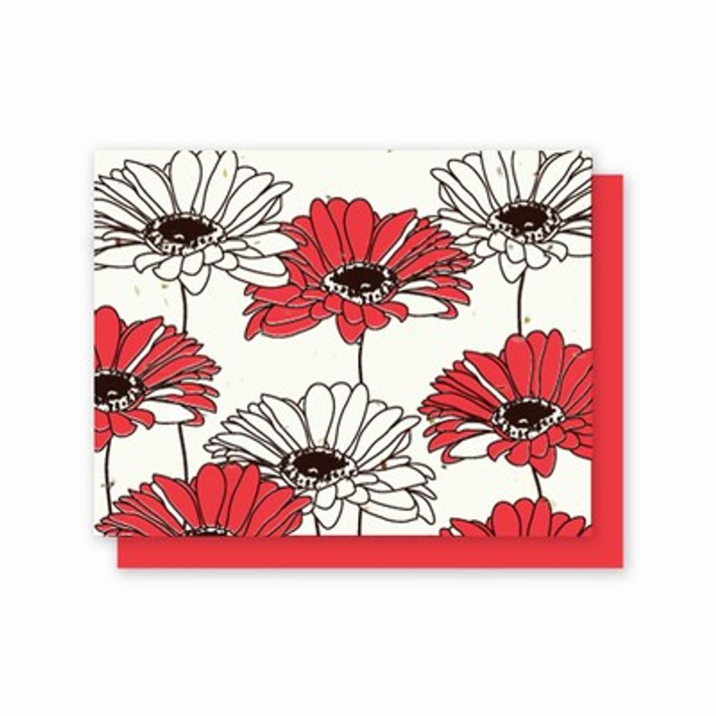 Grow-A-Note Gerber Daisy Box Set - 5 Cards