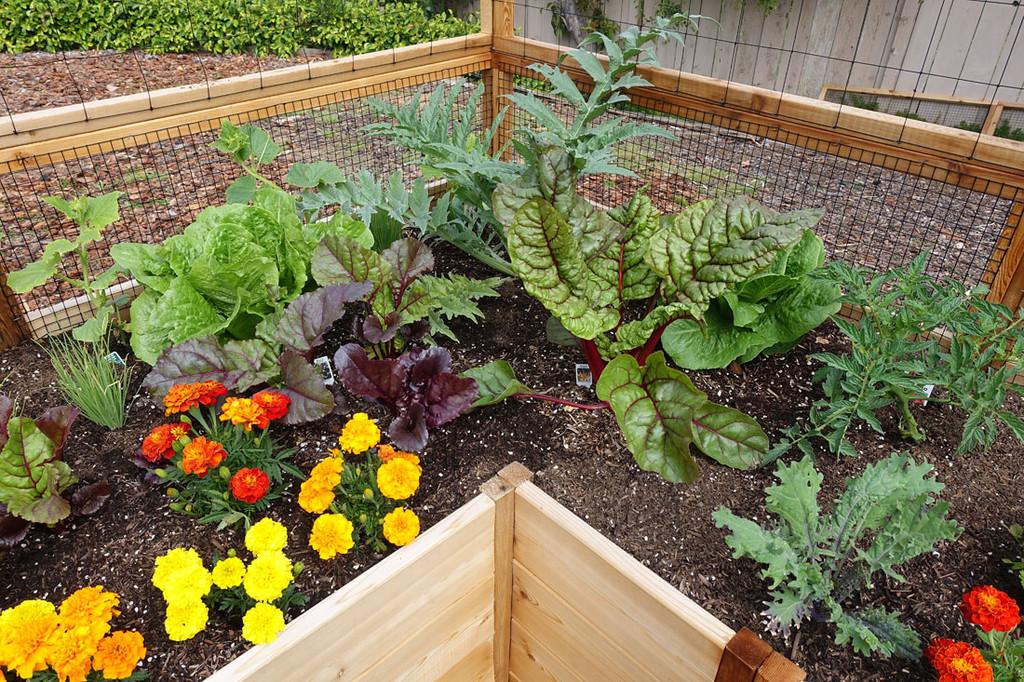 Cedar Complete Raised Garden Bed Kit - 8' x 16'