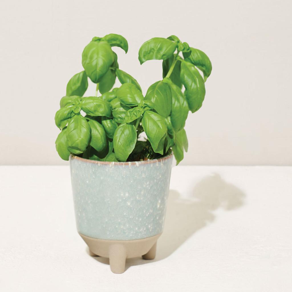 Glow & Grow Candle Herb Planter Kit