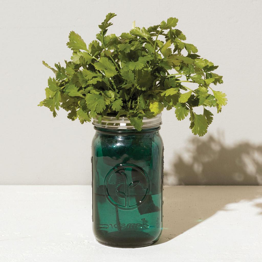 Cilantro Garden Jar