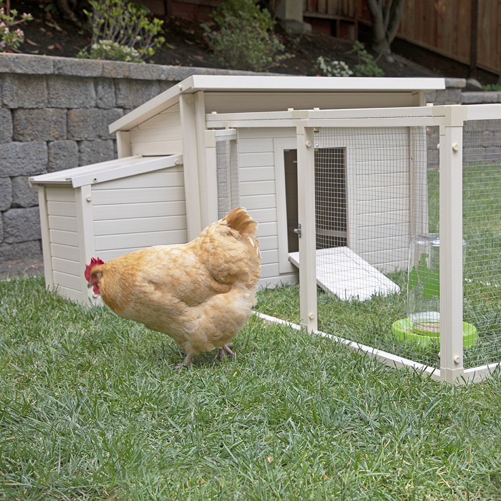 Regular - Natural (Coop not included)