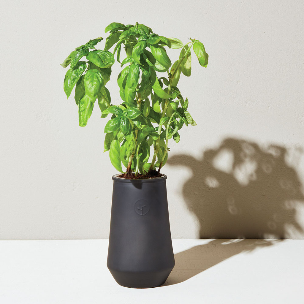 Tapered Tumbler Basil Grow Kit