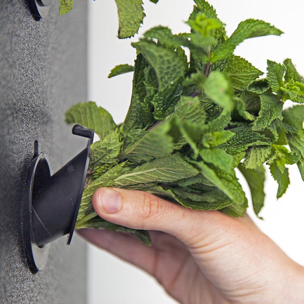 The Eve - Indoor Vertical Hydroponic Garden System