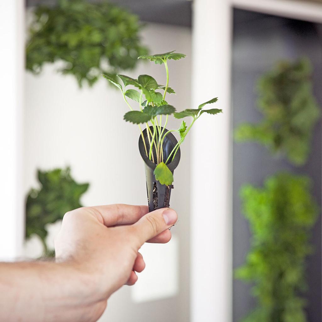 The Aeva - Indoor Vertical Hydroponic Garden System